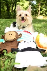 Ziggy - therapy dog with puppets